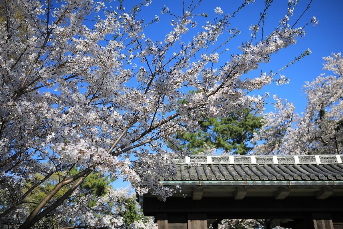 二之丸大手二之門は桜が映えますね