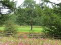 鶴見台のきれいな花とタンチョウ