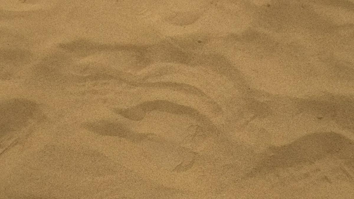 ラクダの足跡の写真