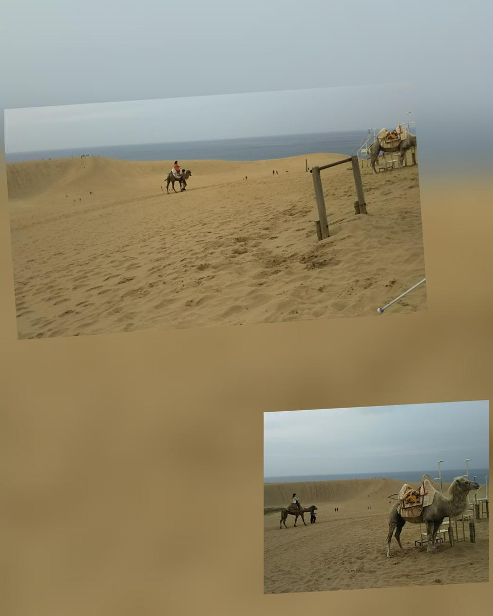 ラクダに乗っている写真