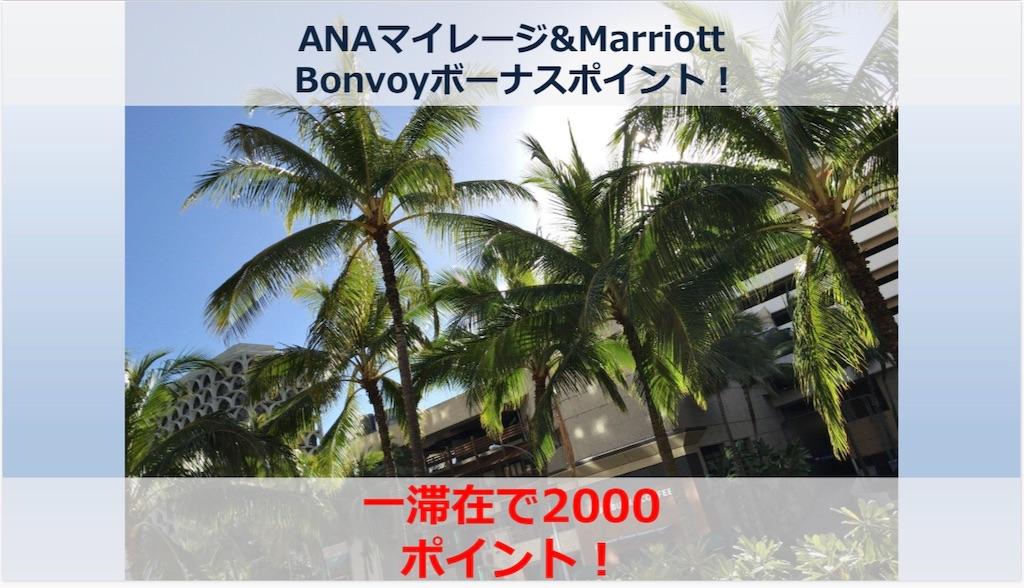 f:id:donguri-Genie:20200307175902j:image