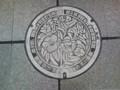 松山市 ヤブツバキ