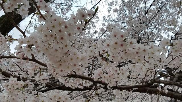 f:id:dongurin23:20170406190856j:image