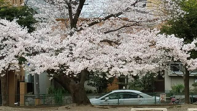 f:id:dongurin23:20170406190945j:image