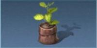 小さな苗木