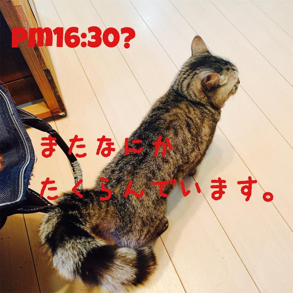 f:id:donkilovsurf:20200416224813j:image