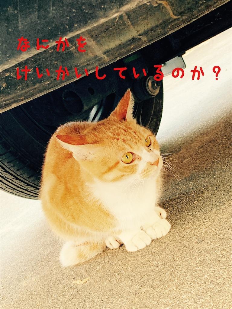 f:id:donkilovsurf:20201016224929j:image