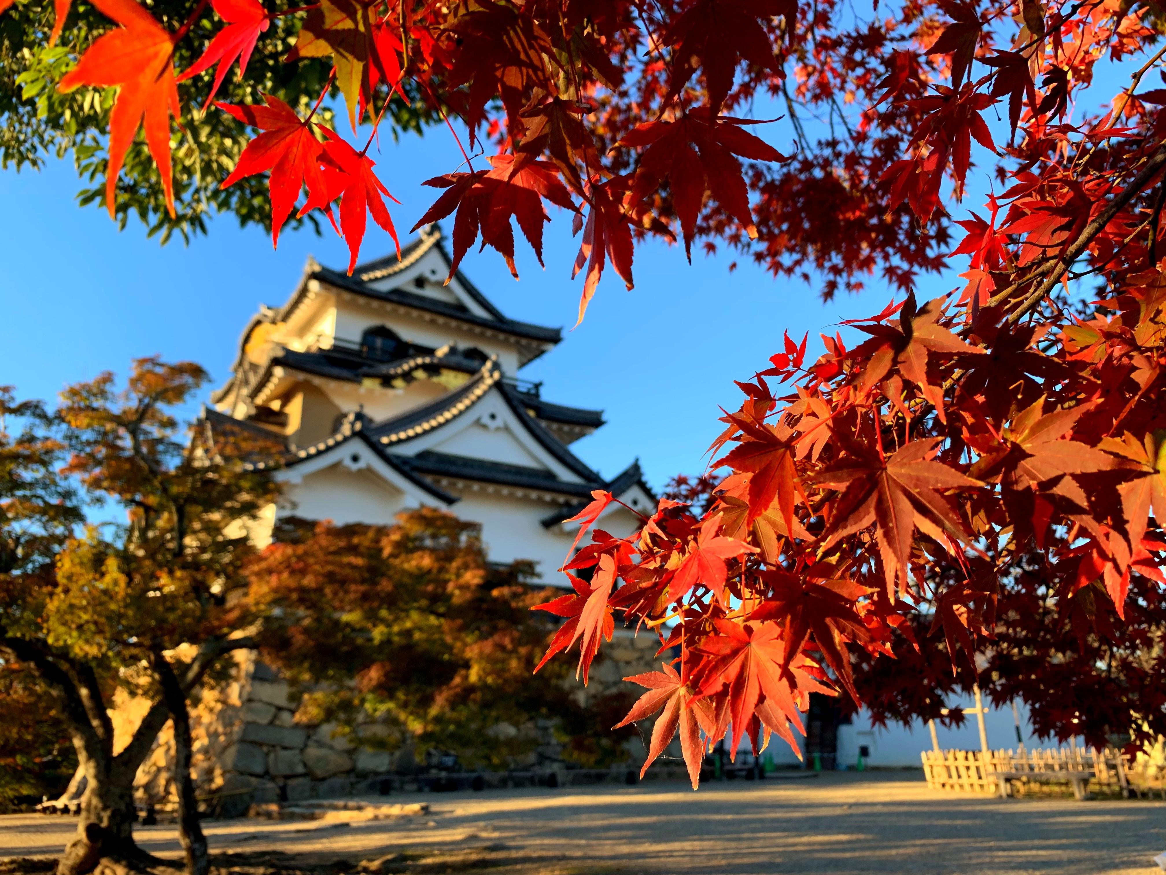 紅葉に染まる彦根城