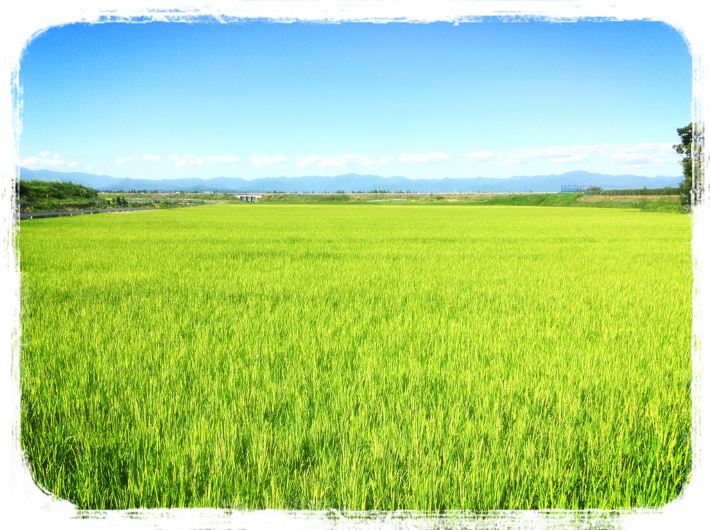 f:id:dorifuto-naoki:20160812144746j:plain