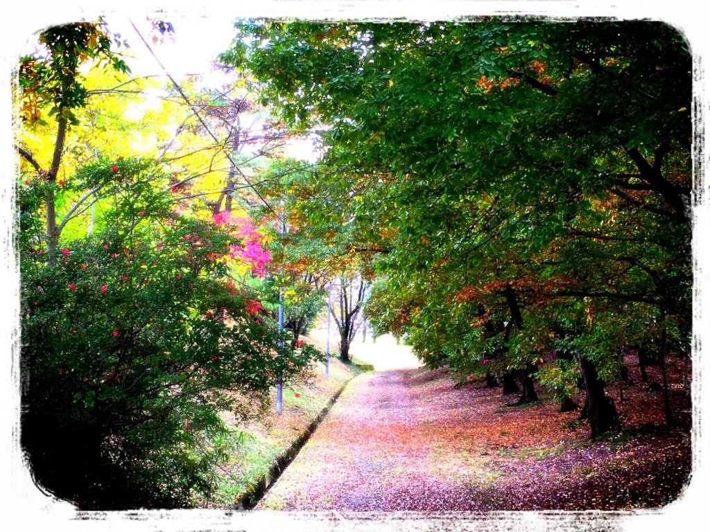 f:id:dorifuto-naoki:20161201055403j:plain