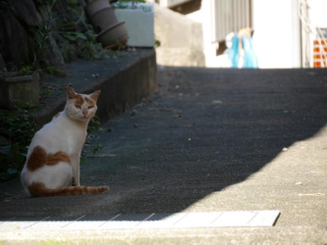 f:id:doroyamada:20150920150000j:image