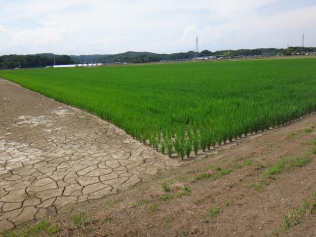 f:id:doroyamada:20180803221719j:image