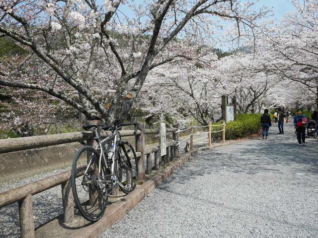 f:id:doroyamada:20190408203515j:image