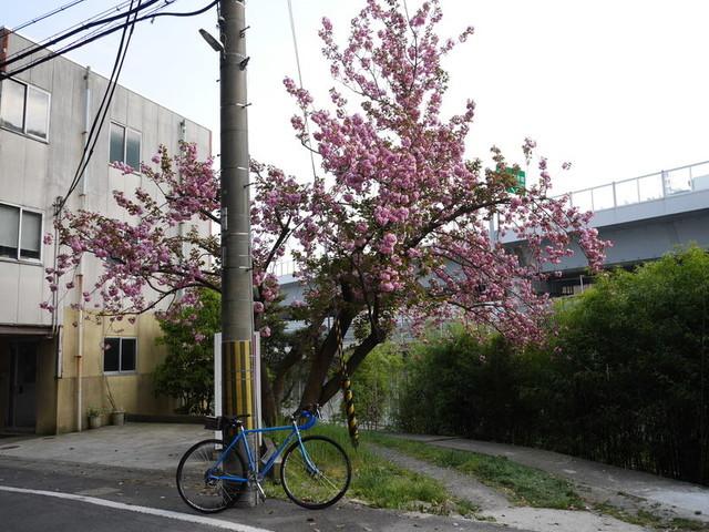 f:id:doroyamada:20190424210657j:image
