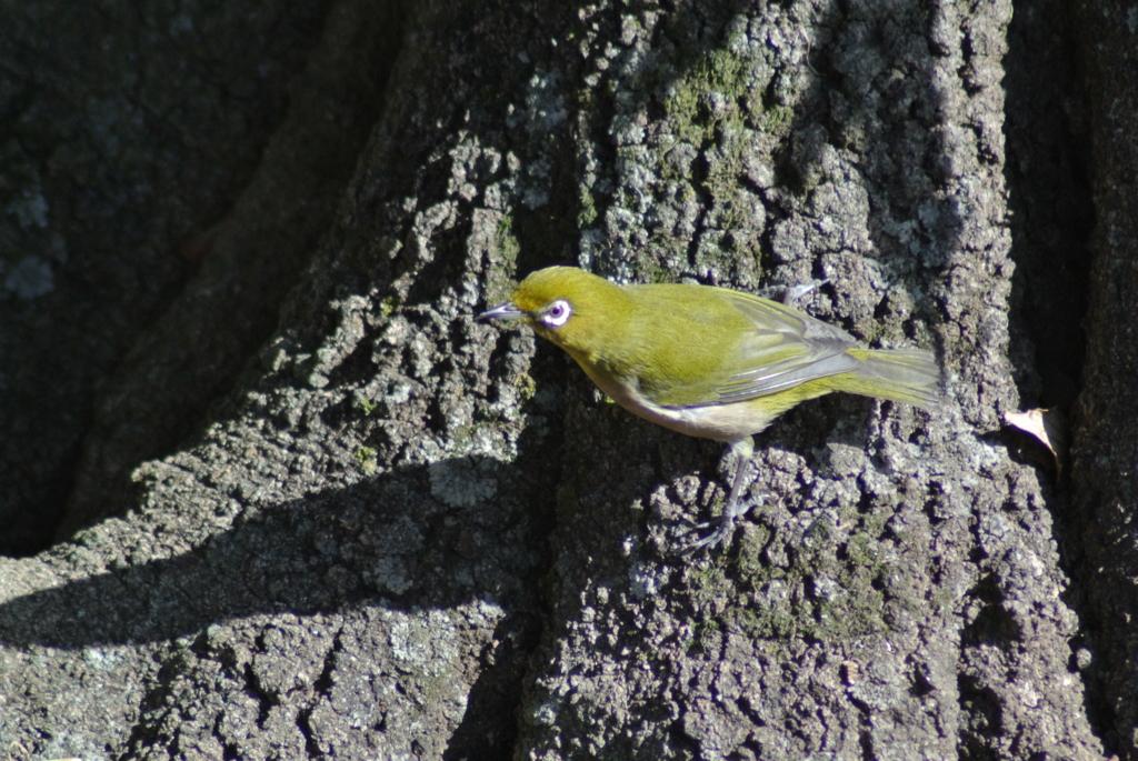 f:id:doshiroutobirder:20170118174519j:plain
