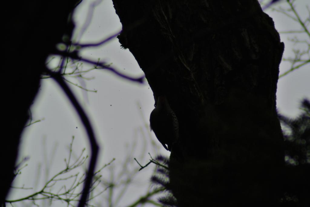 f:id:doshiroutobirder:20170315172441j:plain