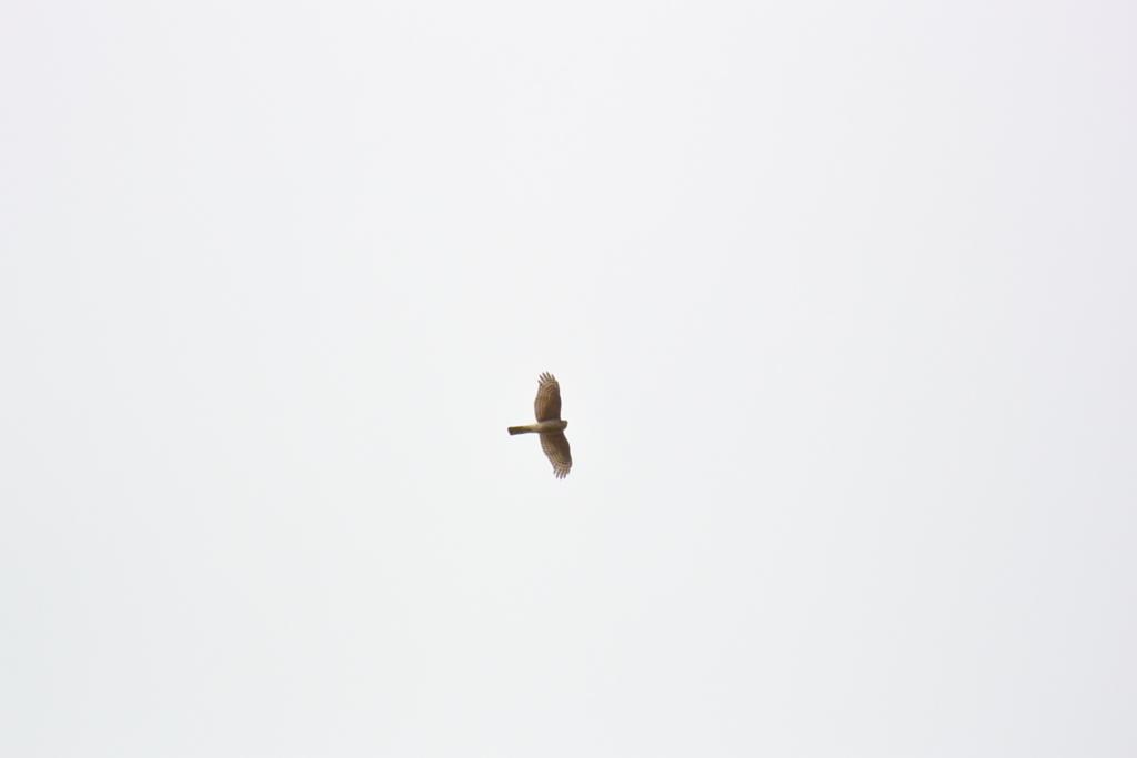 f:id:doshiroutobirder:20180215180056j:plain