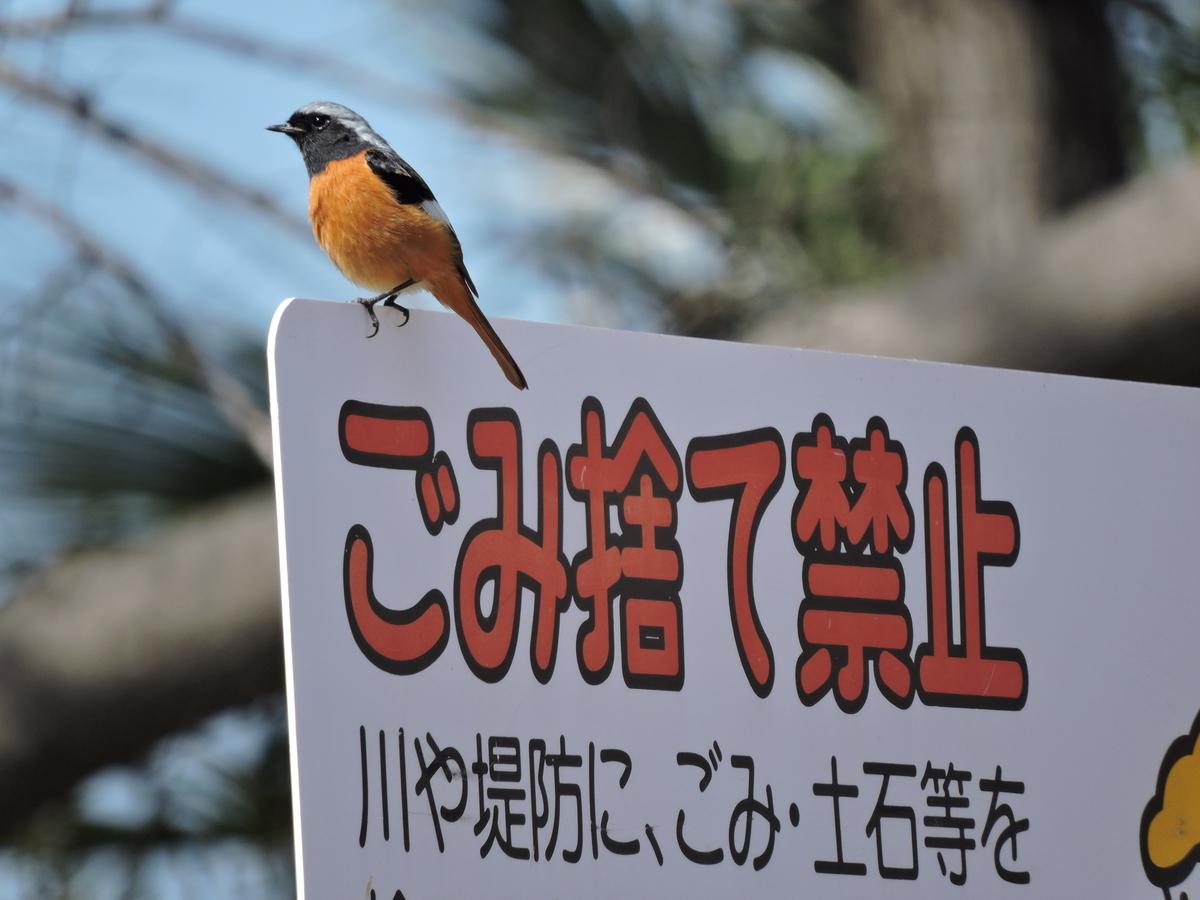 f:id:doshiroutobirder:20210302204513j:plain