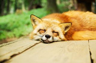 睡眠の質の高め方を夜眠れない人におすすめしたい方法