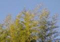 [花][竹]竹
