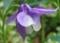 おだまき紫