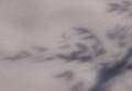 [雪]雪 南天の影