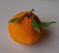[果物][デコポン]デコポン