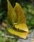 挿し木をした白椿の芽