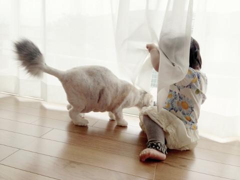 毛刈りされた猫と娘
