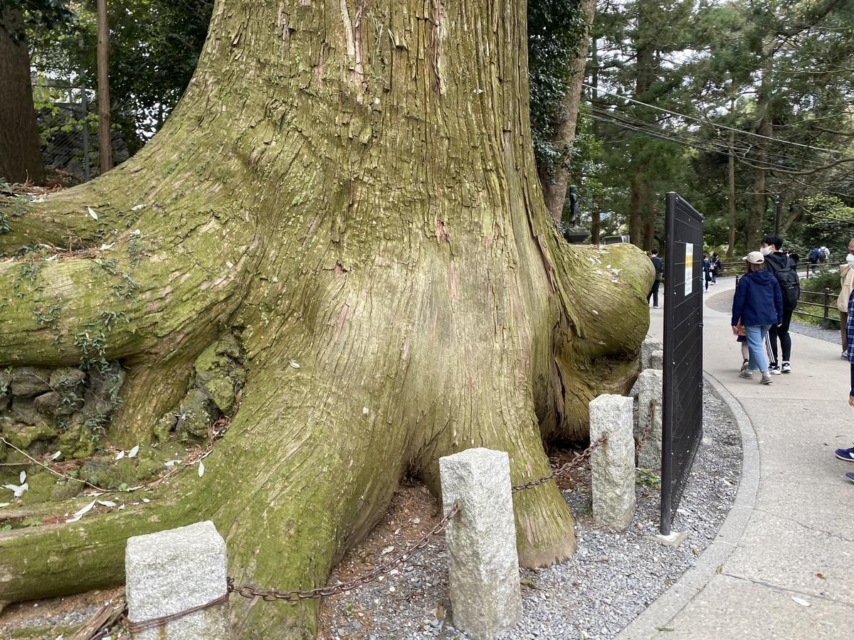 高尾山ドラクエウォークたこ杉