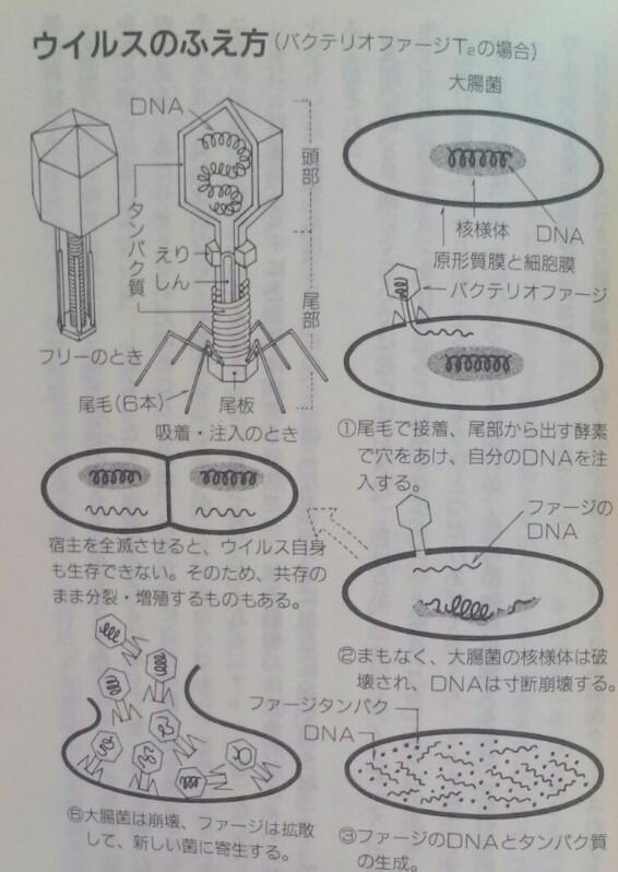 f:id:dr-yokohamaner:20200224120057j:plain