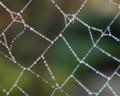 蜘蛛の巣の露1