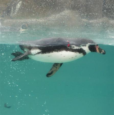 1703ペンギン