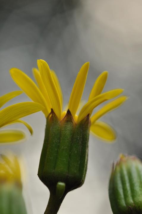 f:id:dragontone:20111018160218j:plain
