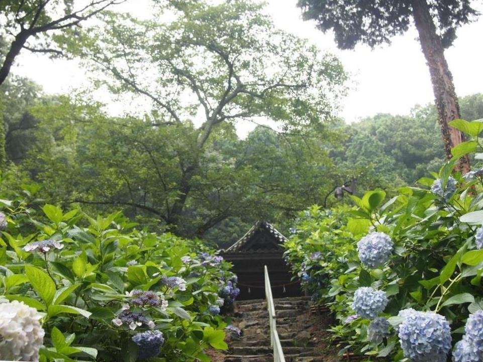 f:id:dreamjourney:吉備津神社の紫陽花。階段の上あたりは青色、水色中心。