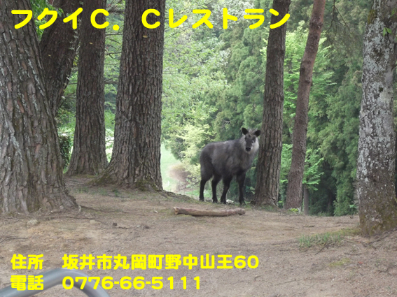 https://cdn-ak.f.st-hatena.com/images/fotolife/d/dreammiminabe53/20010104/20010104103740.jpg