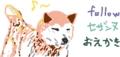 柴犬、秋田犬、甲斐犬などが好きな人は私のもとへ集まりなさい!以上