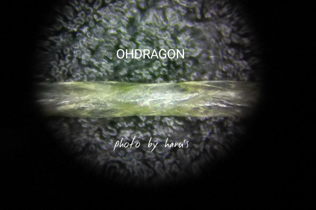 ohdragon オードラゴン滑らか