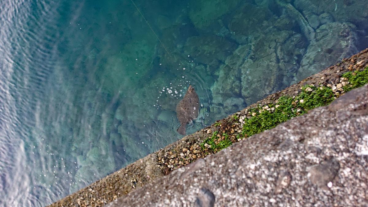 堤防 ヒラメ