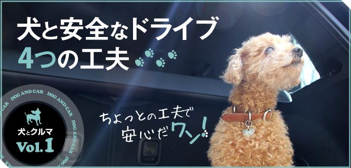 犬とドライブも楽しみたい人へ。すぐにできる、愛犬の安全が守れる4つの工夫vvv