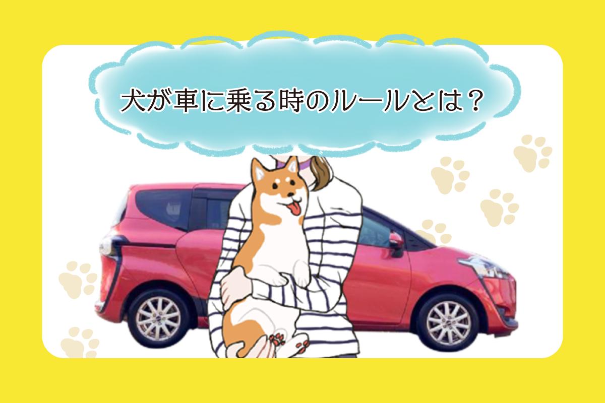 「乗せ方によっては法律違反?!」犬がクルマに乗る時のルールと安全を守る方法