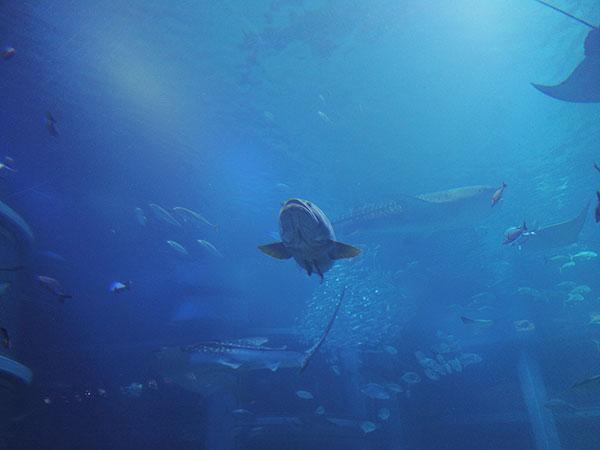 オスモポケットで撮った水族館