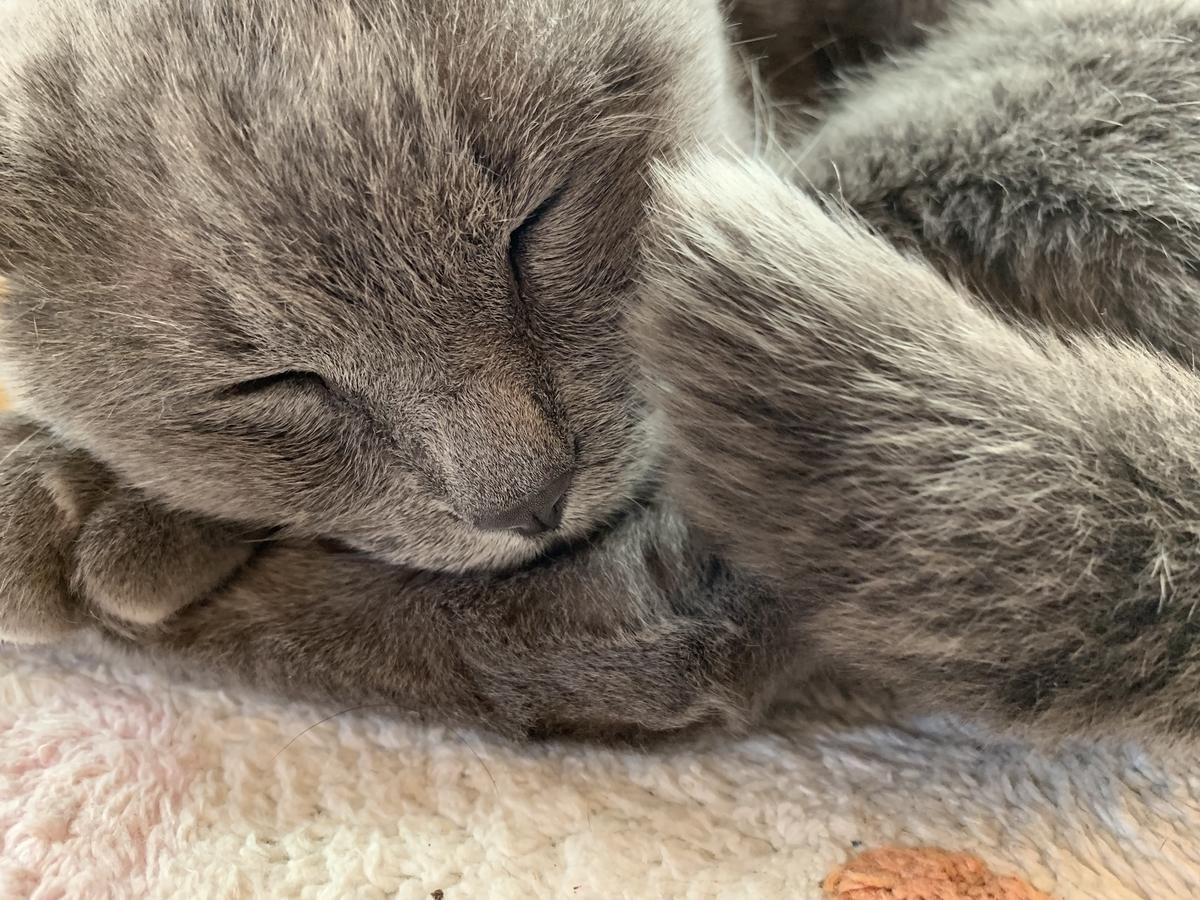 iPhone XRで撮影した猫