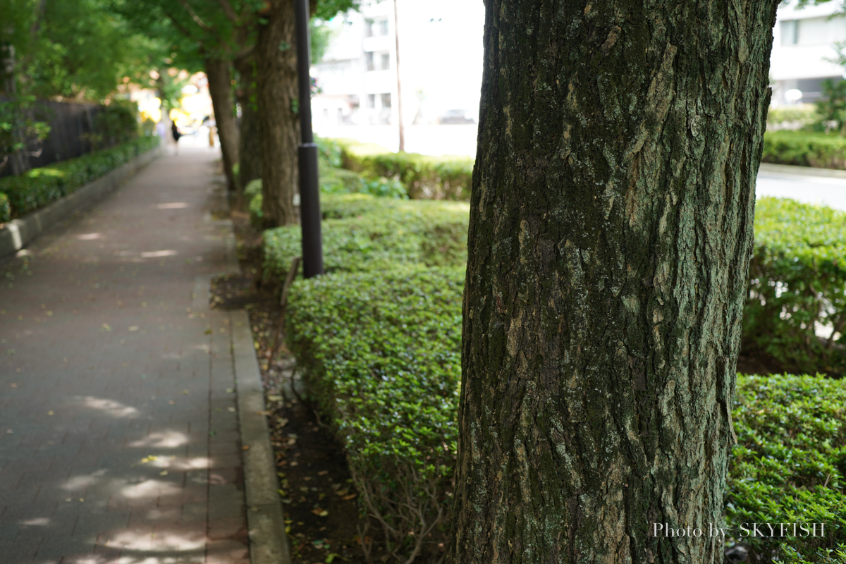 45mm F2.8 DG DN Contemporaryで撮影