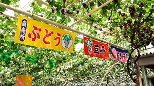 川井遊覧農園(2013.08.04)