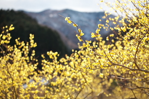 Canon EOS 5D MarkII & EF100mm F2.8L マクロ IS USM 松川湖(2011.02.13)