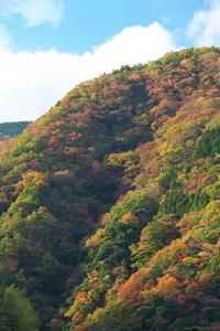 紅葉(2012.11.18)