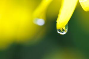 Canon EOS 5D MarkII & EF100mm F2.8L マクロ IS USM 庭の植物たち(2011.05.01)