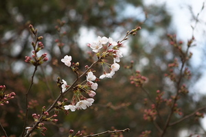 Canon EOS 5D MarkII & Canon EF24-70mm F2.8L USM 駿府公園(2009.03.22)