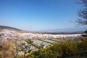 Canon EOS 5D MarkII & Canon EF17-40mm F4L USM 富士霊園(2009.04.11)
